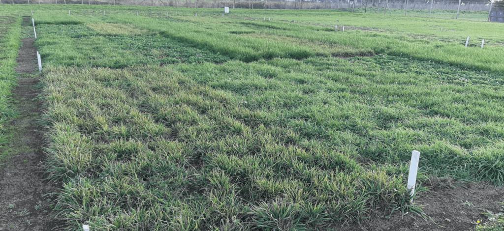 AGROCOLUN-53-agricola-imagen-1