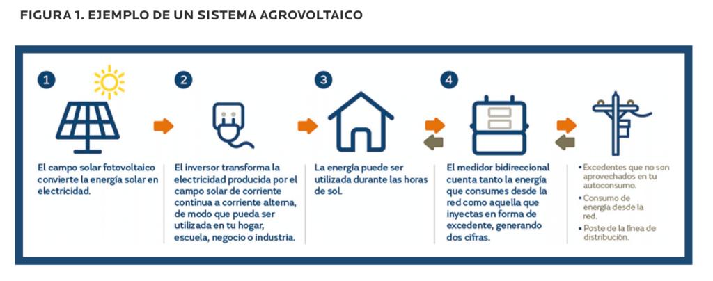 AGROCOLUN-53-sustentabilidad-delsantek-de-leche-imagen-3