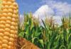 AGROCOLUN-54-agricola-imagen-0