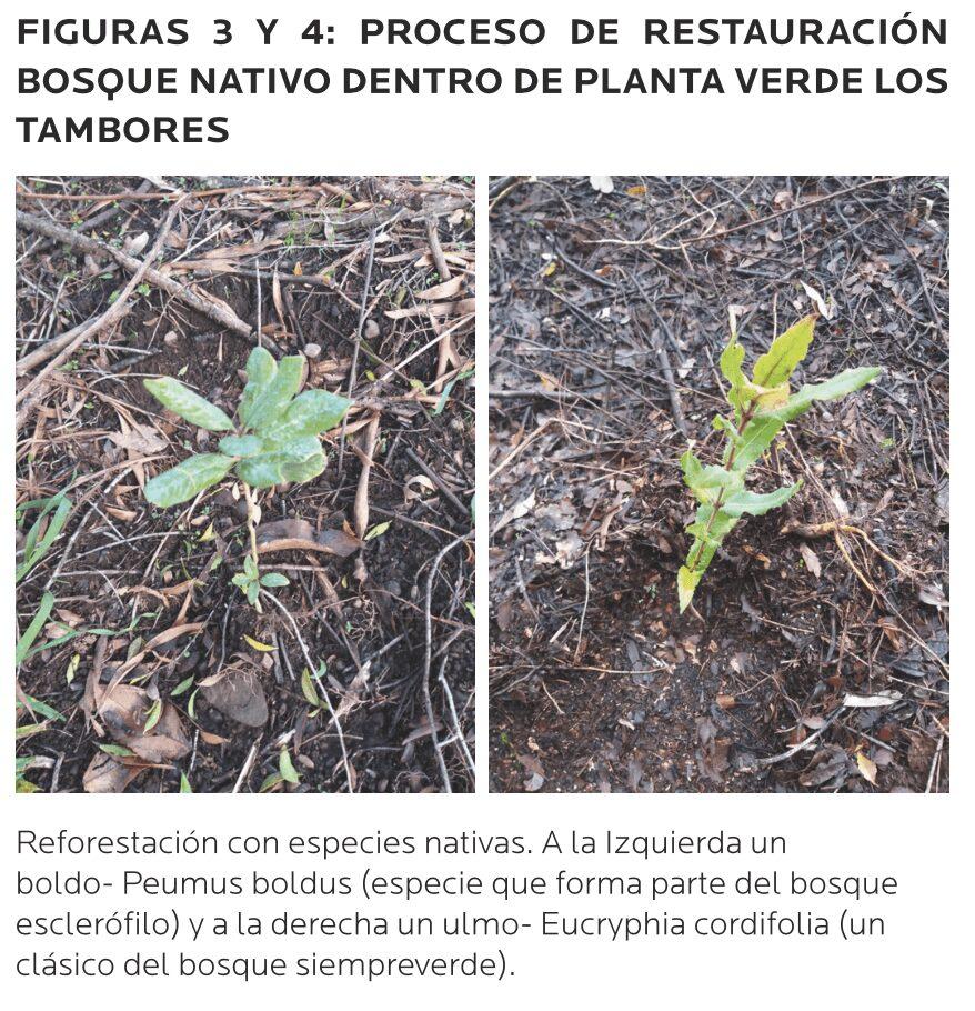 AGROCOLUN-54-sustentabilidad-imagen-4