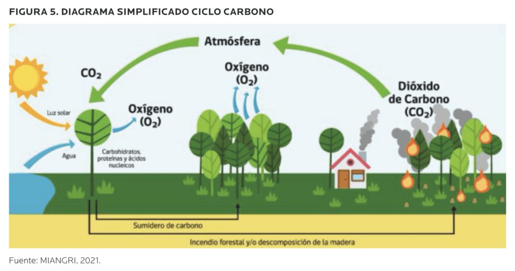 AGROCOLUN-54-sustentabilidad-imagen-7