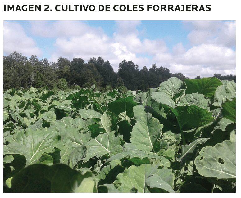 AGROCOLUN-55-agricola-1-imagen-2