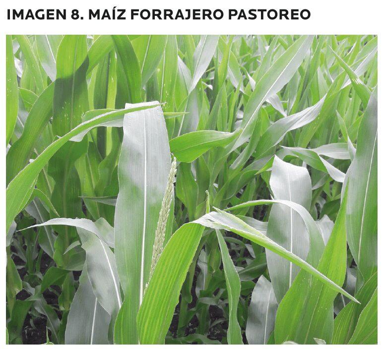 AGROCOLUN-55-agricola-2-imagen-15