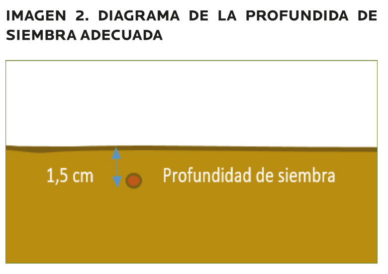 AGROCOLUN-55-agricola-2-imagen-3
