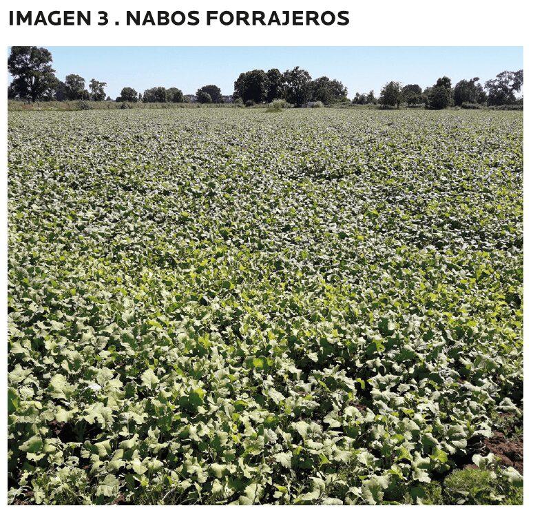 AGROCOLUN-55-agricola-2-imagen-6