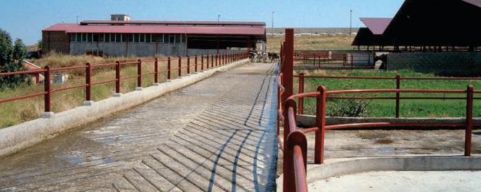 AGROCOLUN-55-bienestar-animal-imagen-0