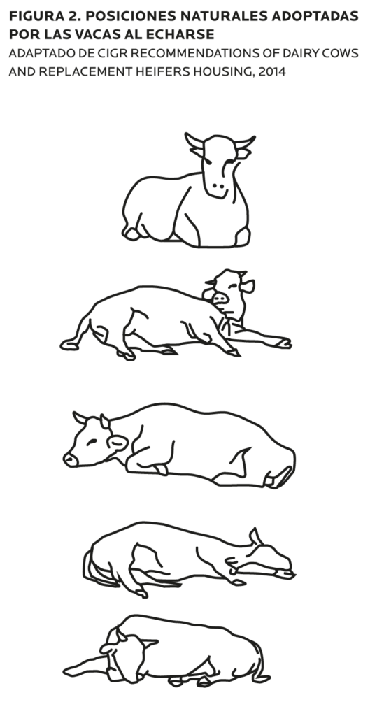 AGROCOLUN-55-bienestar-animal-imagen-3