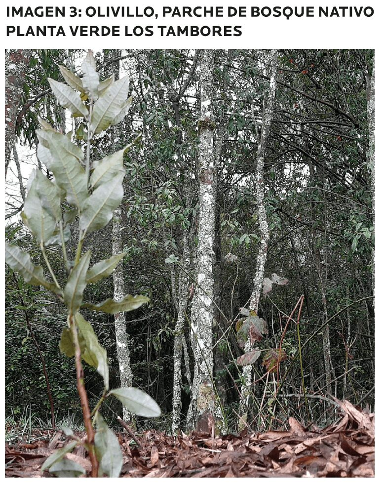 AGROCOLUN-55-sustentabilidad-imagen-2